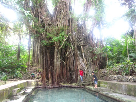 400-year old Balete tree at Siquijor