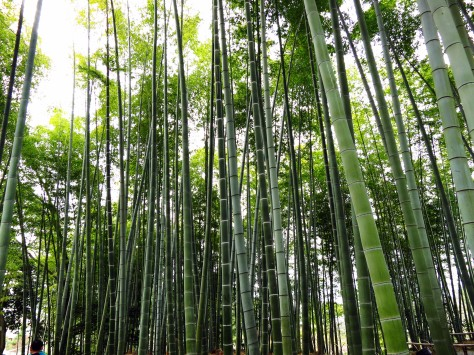 And a bamboo tree forest too.