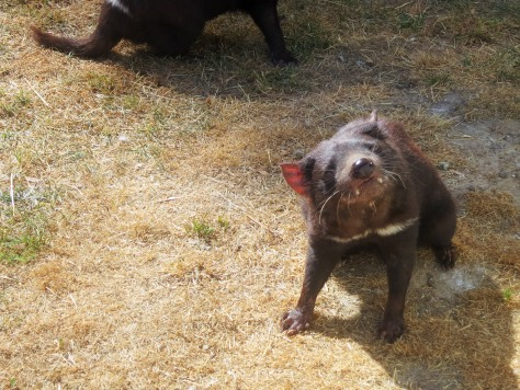 Behold the Tasmanian Devil. No, it doesn't spin.