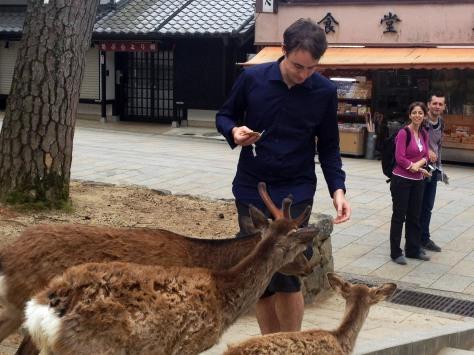 Deer flocking to Prince Charming