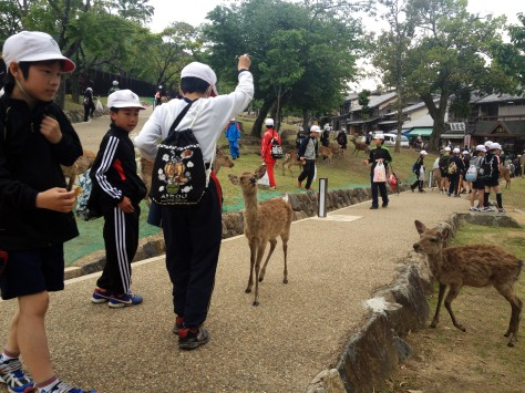 We came across several groups of students while wandering around Nara. It was fun to see that I wasn't the only one running and shrieking like a kid when the deer swarms to you for some biscuits.