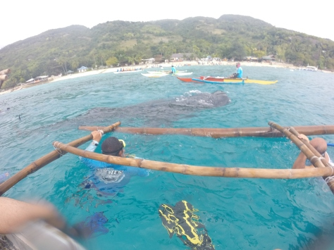 Oslob Cebu - Whale Shark (Butanding)